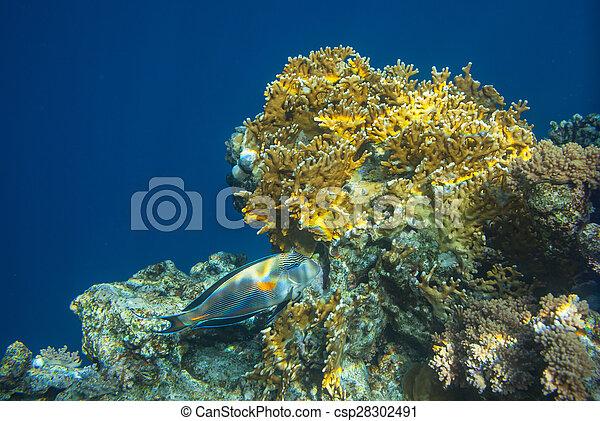 Pescado coral - csp28302491