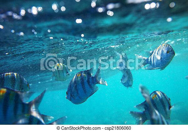 Pescado coral - csp21806060