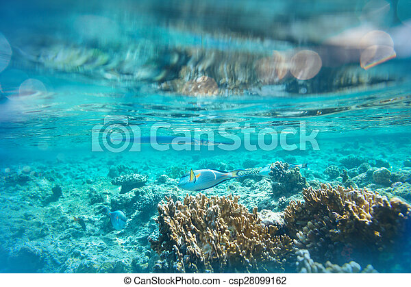Pescado coral - csp28099162