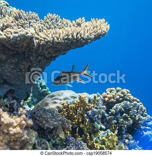 Pescado coral - csp19058574