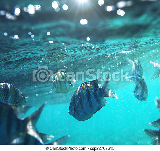 Pescado coral - csp22707615