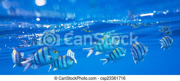 Pescado coral - csp23361716