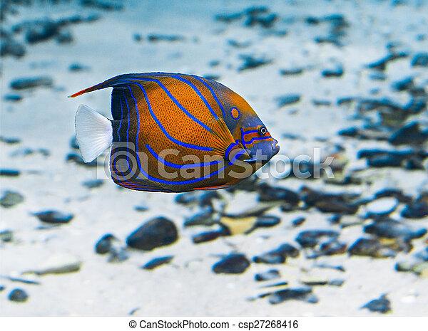 Pescado coral - csp27268416