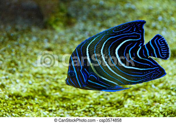 Pescado coral - csp3574858