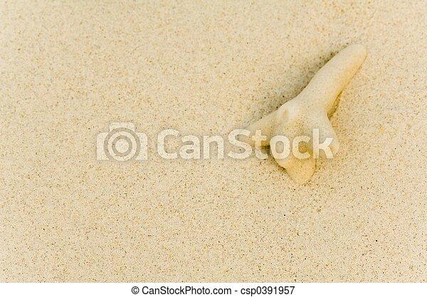 Coral - csp0391957