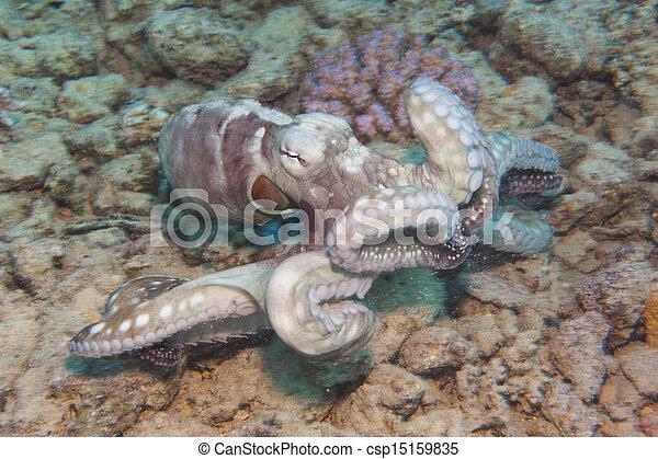 Pulpo en un arrecife de coral - csp15159835