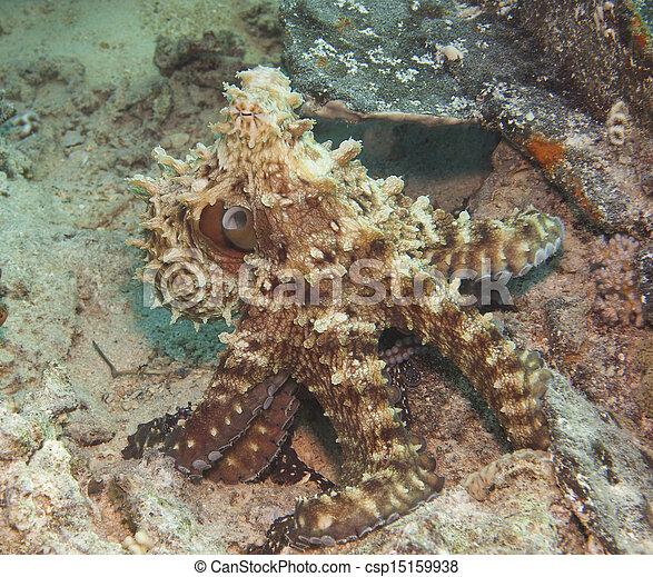 Pulpo en un arrecife de coral - csp15159938