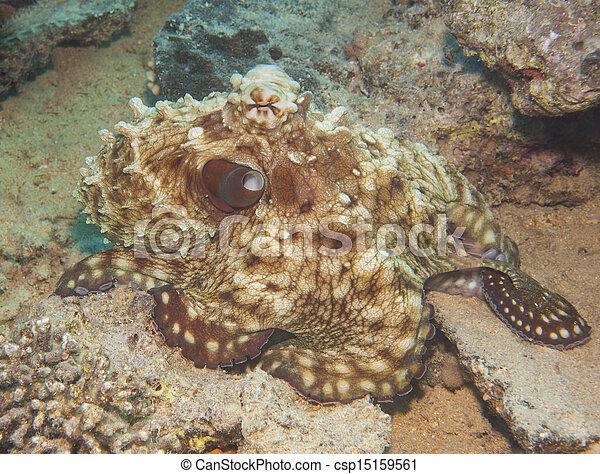 Pulpo en un arrecife de coral - csp15159561