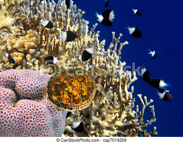 Coral reef and turtle - csp7014259