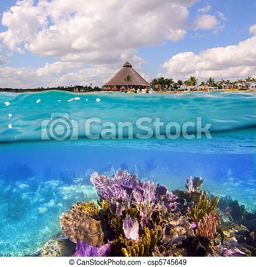 Coral reef in Mayan Riviera Cancun Mexico - csp5745649