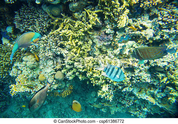 coral reef of the red sea - csp61386772