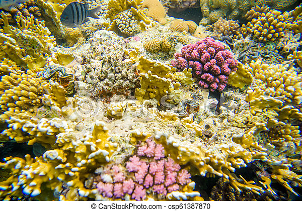 coral reef of the red sea - csp61387870