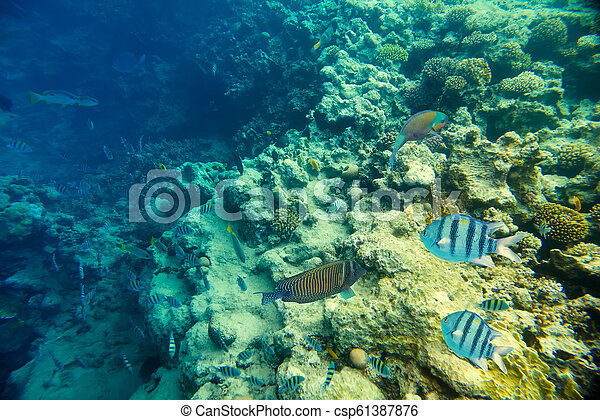coral reef of the red sea - csp61387876