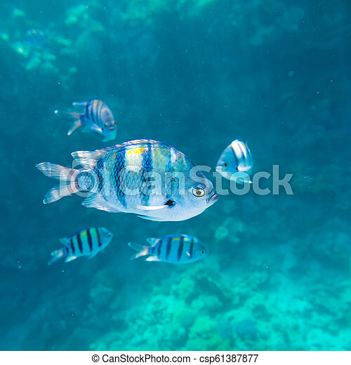 coral reef of the red sea - csp61387877