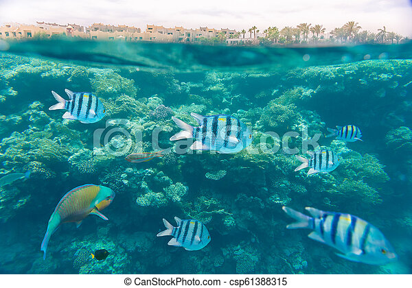 coral reef of the red sea - csp61388315