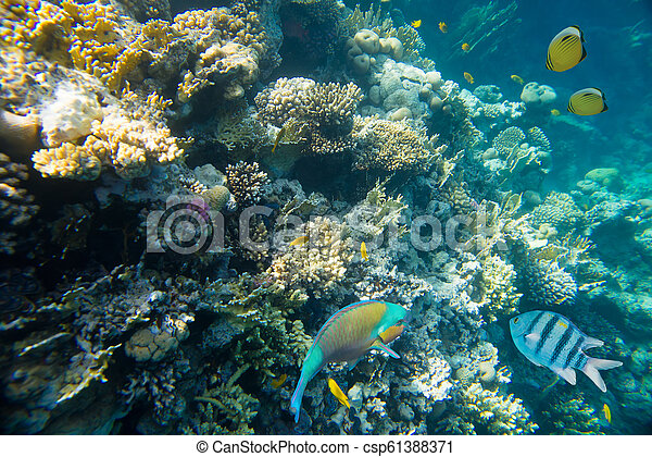coral reef of the red sea - csp61388371