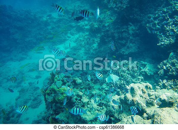coral reef of the red sea - csp61386668