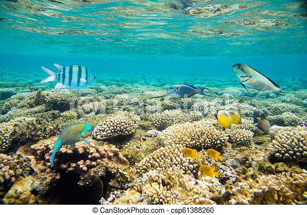 coral reef of the red sea - csp61388260