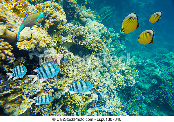 coral reef of the red sea - csp61387840