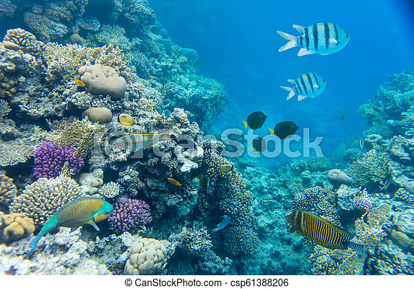 coral reef of the red sea - csp61388206