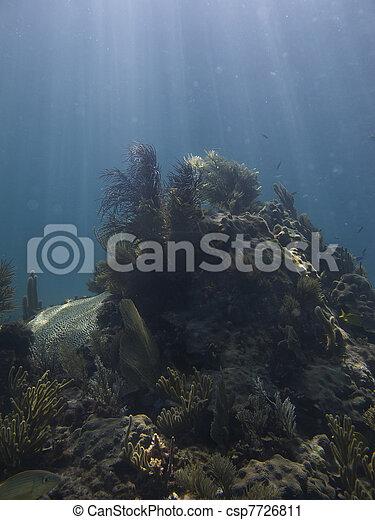 Coral reef - csp7726811