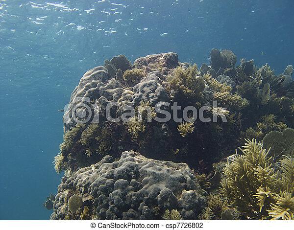 Coral reef - csp7726802