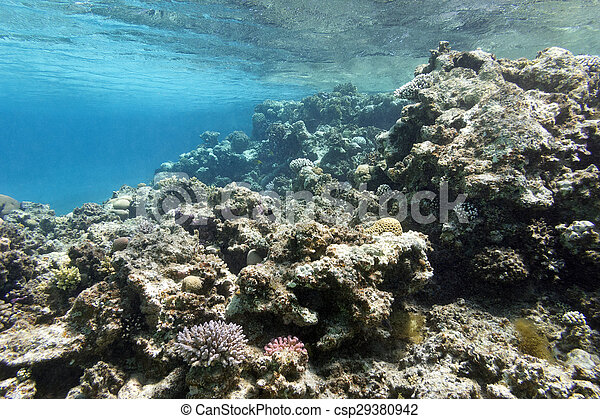 coral reef under the surface of water in tropical sea, underwater - csp29380942