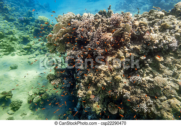 Coral Reef under water of the Red Sea - csp22290470