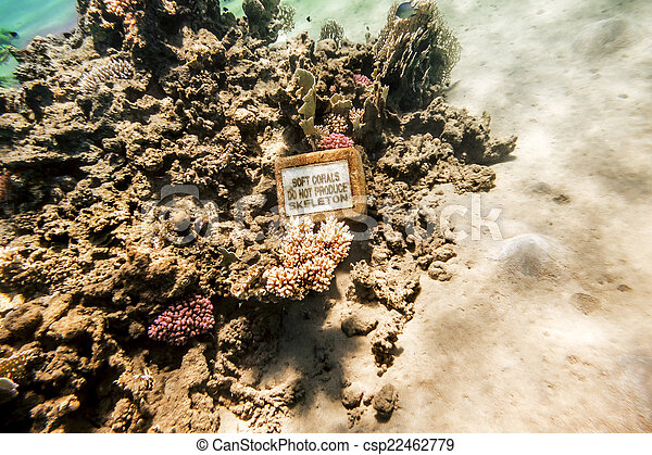 Coral Reef under water of the Red Sea - csp22462779
