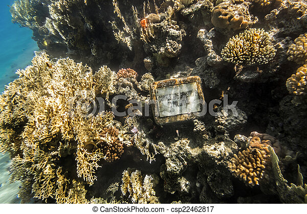 Coral Reef under water of the Red Sea - csp22462817
