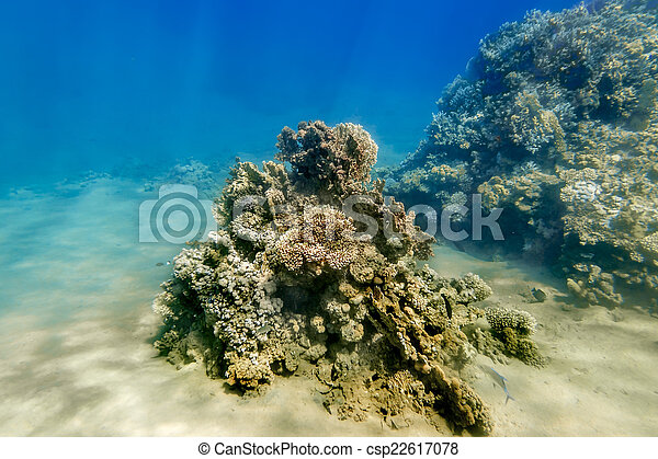 Coral Reef under water of the Red Sea - csp22617078