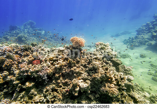 Coral Reef under water of the Red Sea - csp22462683