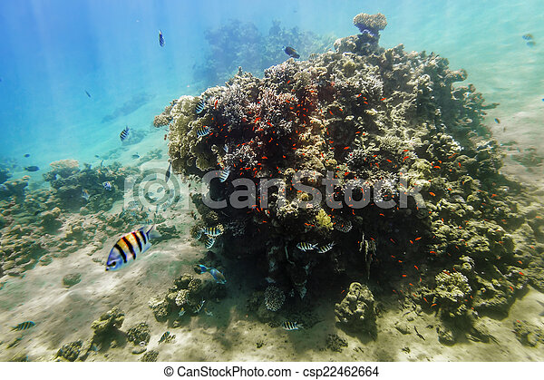 Coral Reef under water of the Red Sea - csp22462664