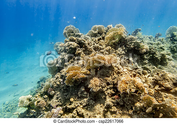 Coral Reef under water of the Red Sea - csp22617066