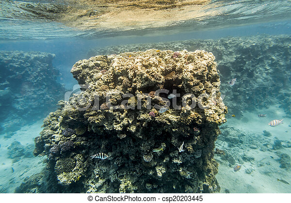 Coral Reef under water of the Red Sea - csp20203445