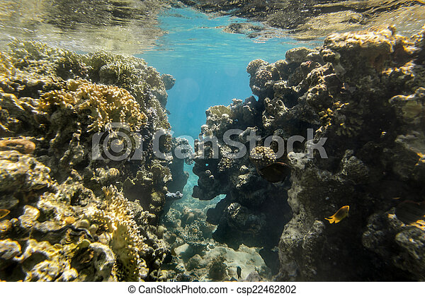 Coral Reef under water of the Red Sea - csp22462802