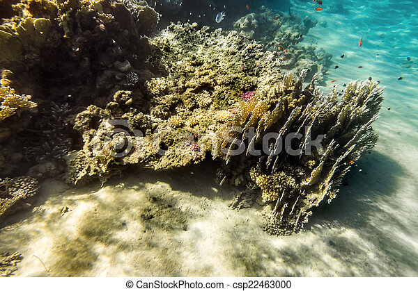 Coral Reef under water of the Red Sea - csp22463000