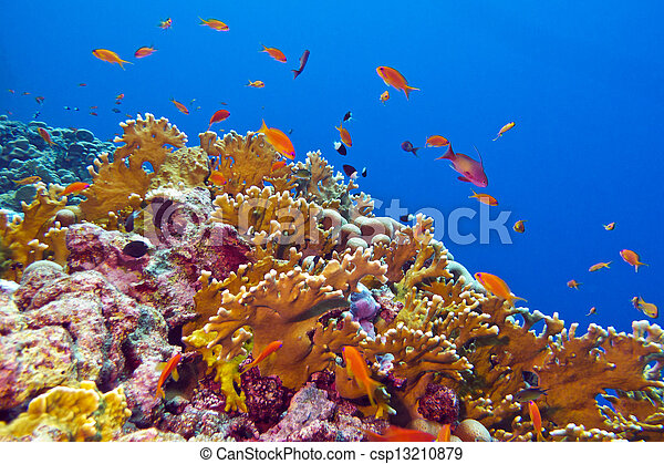 coral reef with fire coral and exotic fishes at the bottom of tropical sea - csp13210879