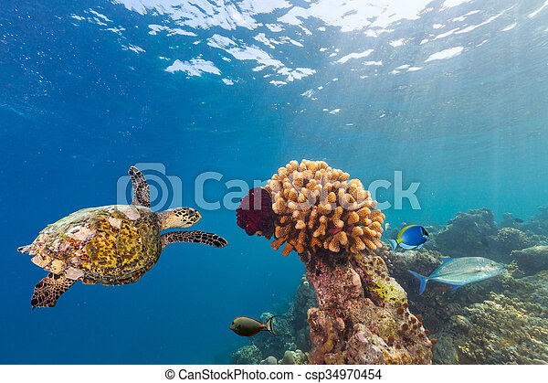 Coral reef with turtle - csp34970454