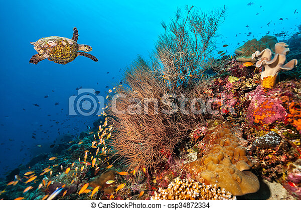 Coral reef with turtle - csp34872334