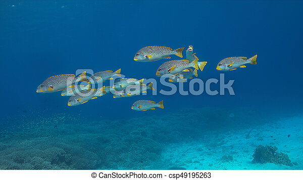 Labios diagonales en un arrecife de coral - csp49195263