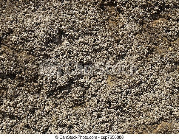 Una textura coral - csp7656888