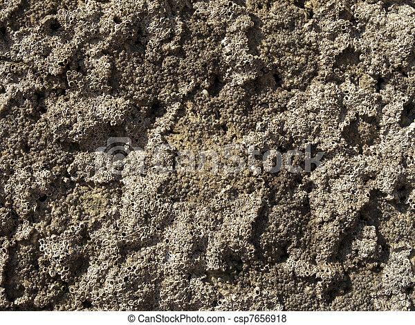 Una textura coral - csp7656918