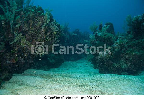 Coral Valley - csp2001929