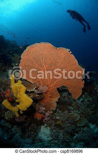 Buzo encima de coral de ventiladores - csp8169896