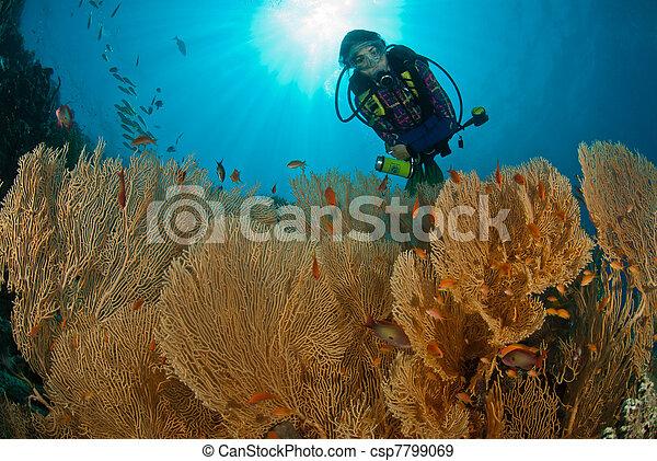 Coral de abanico - csp7799069