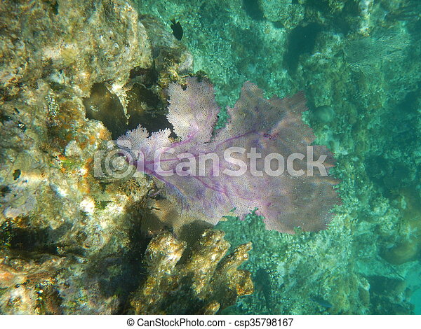 Coral de abanico - csp35798167