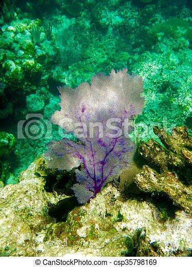 Coral de abanico - csp35798169