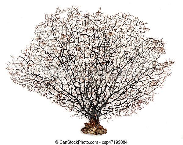Coral de abanico marino - csp47193084