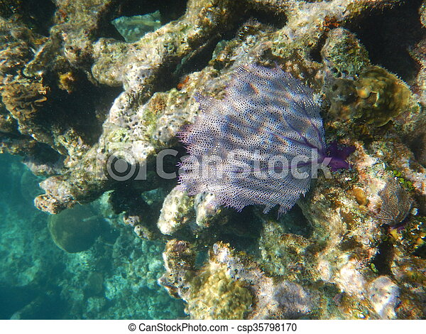 Coral de abanico - csp35798170